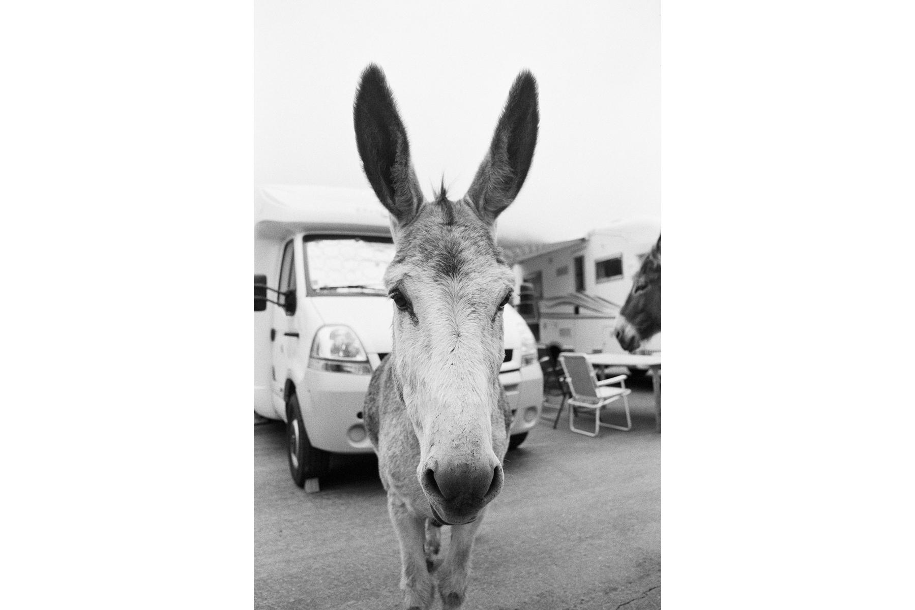 Le Tour de France 2008 The only wild animal I met during my Tour de France Safari. Je crois que ce fut le seul animal sauvage que j'ai rencontré dans mon safari à travers le Tour de France. Das einzige wilde Tier, dem ich auf meiner Foto-Safari während der Tour de France begegnet bin. Creo que este fue el único animal salvaje, que me encontré en mi safari por el tour.